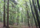 Forest-bathing: quando gli alberi sono terapeutici.